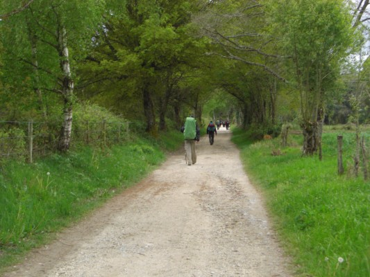 Camino Sarria-Portomarin