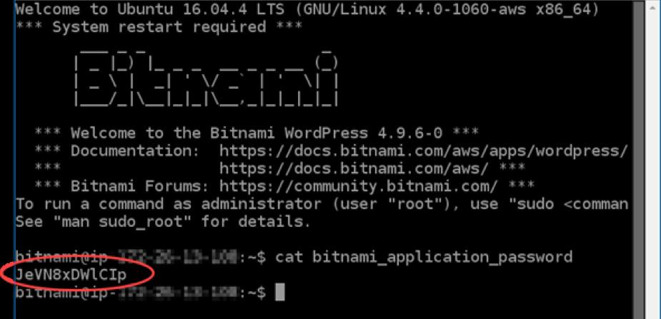 Terminal conexión con instancia vía SSH